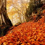 Los sitios preferidos de los blogueros aragoneses. Parte 2