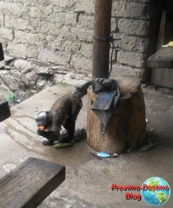 Mono que nos hizo pasar un rato divertido en una de las paradas